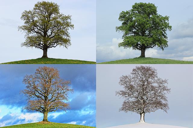 tree-776932_640